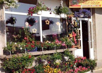 floraria nufarul orastie