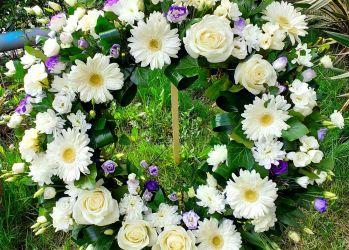 crizantema de aur coroane 4